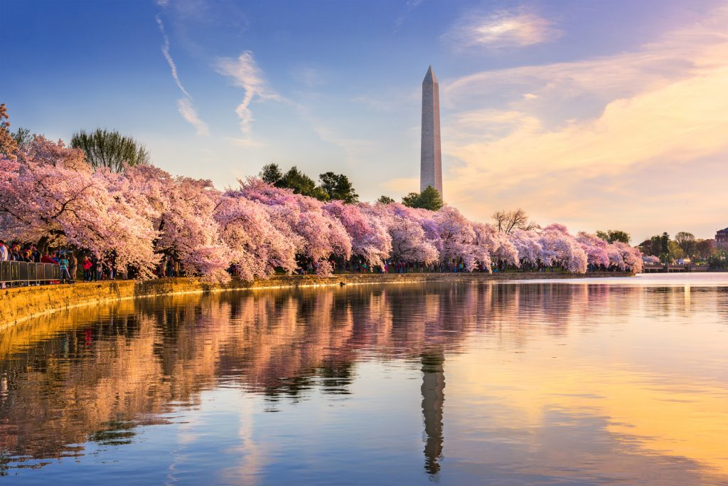 Cherry Blossom Potomac River Cruise