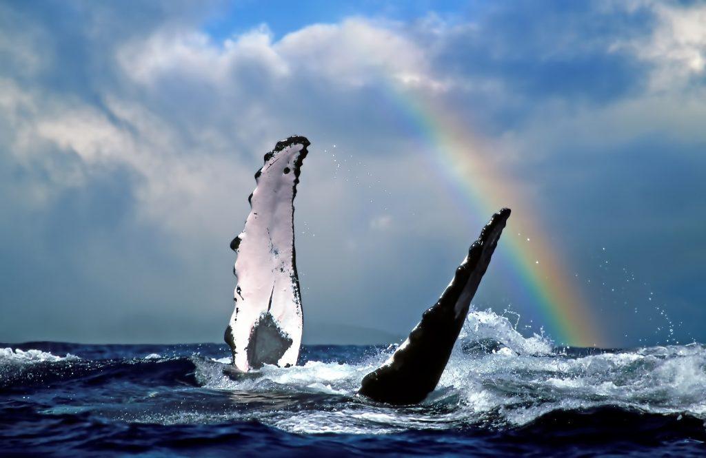 Hawaii whale watching tours