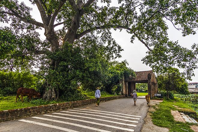 hanoi Duong Lam ancient village  hanoi day trip