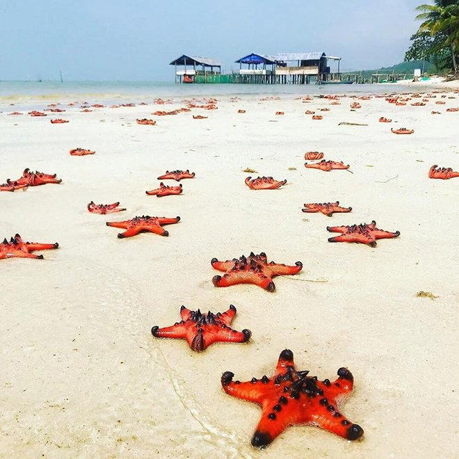 starfish in Phu Quoc