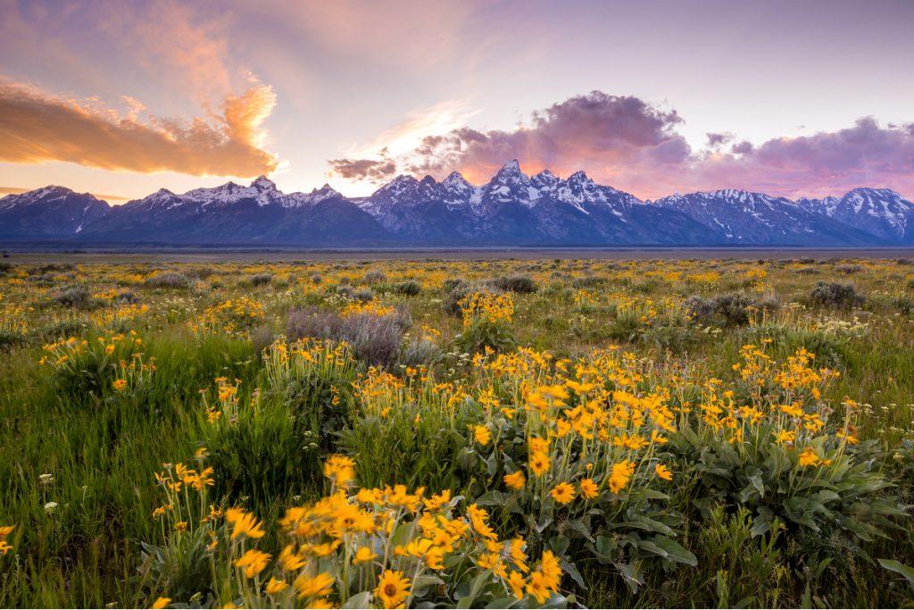 grand teton in spring