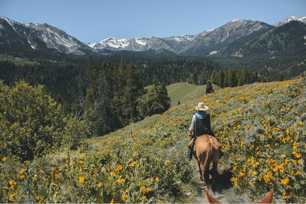 grand teton horseback riding in summer